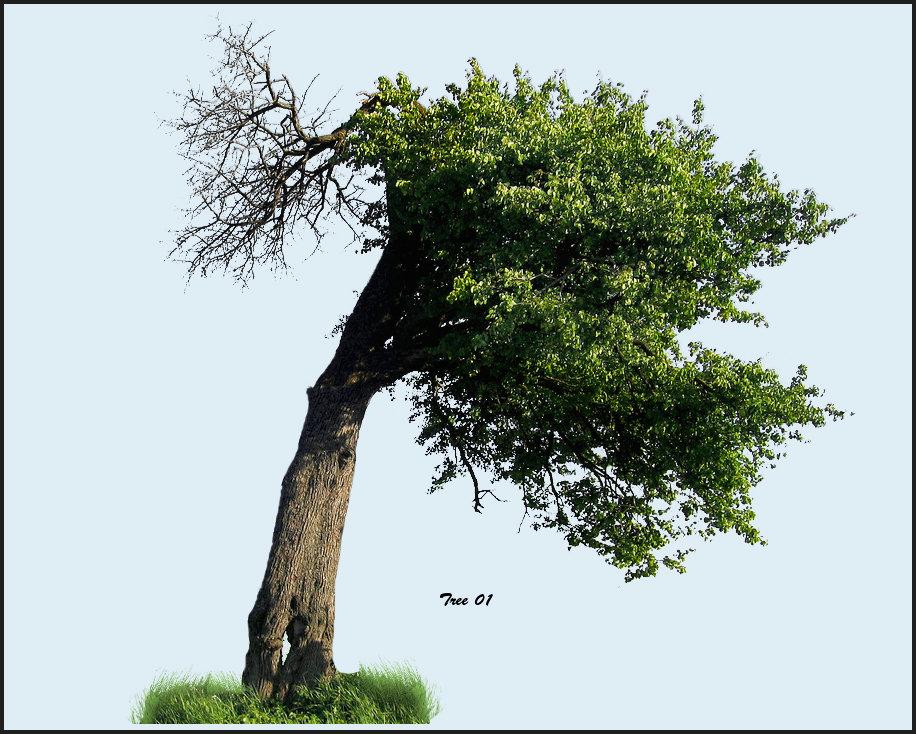 tree01neil.jpg