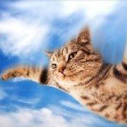 xflyingcat