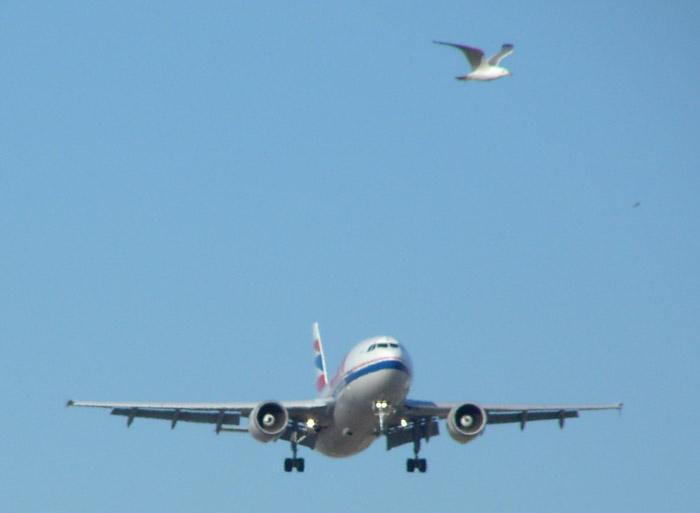 CSA_A310_Bird.jpg