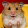 Lazy_Hamster